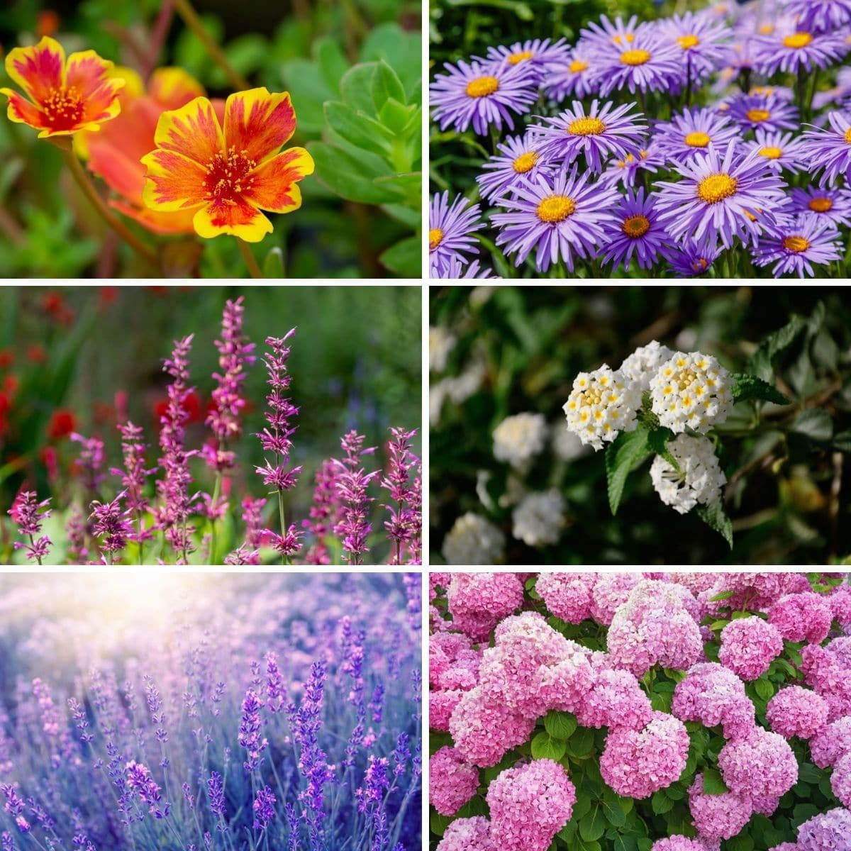 Photo collage featuring drought-tolerant plants from the post.