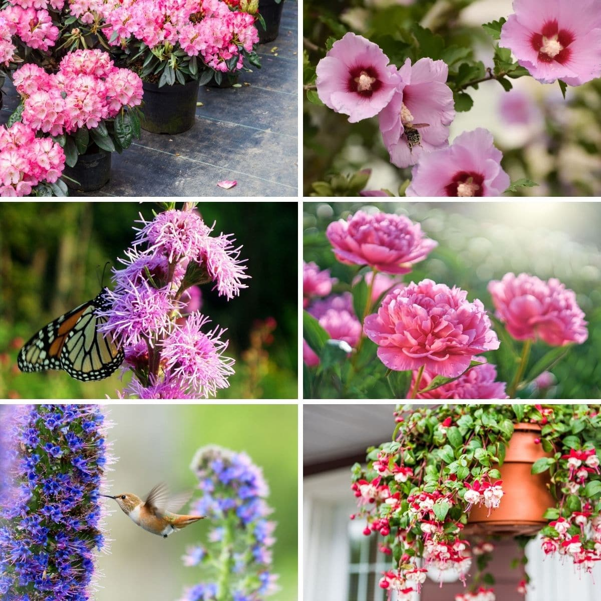 Photo collage of flowers that attract hummingbirds.