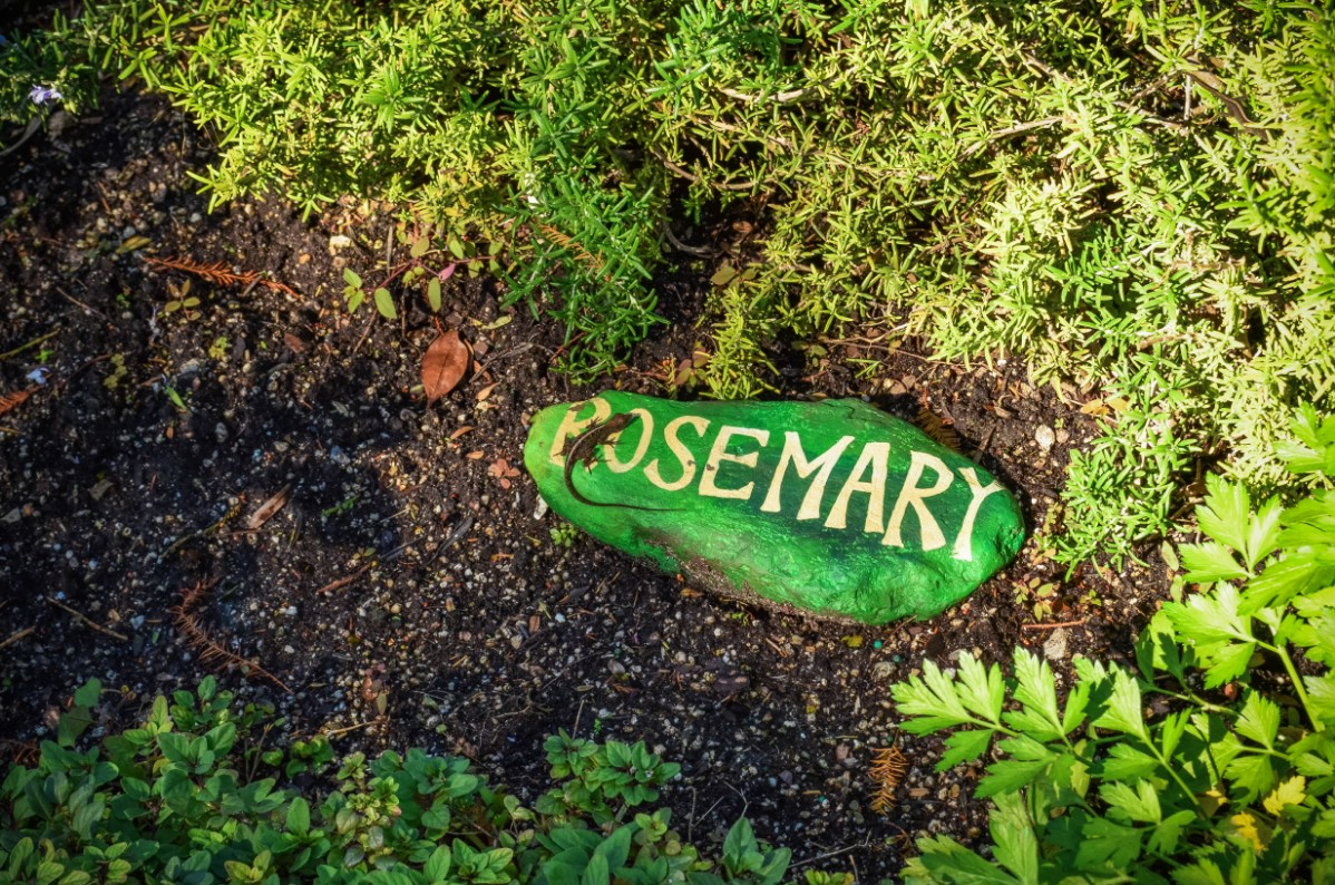 Green painted rock with white lettering that says rosemary