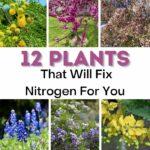 Plants That Will Fix Nitrogen