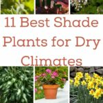 Best Shade Plants for Dry Climates