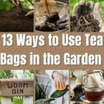 Ways to Use Tea Bags in the Garden