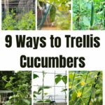 9 Ways to Trellis Cucumbers