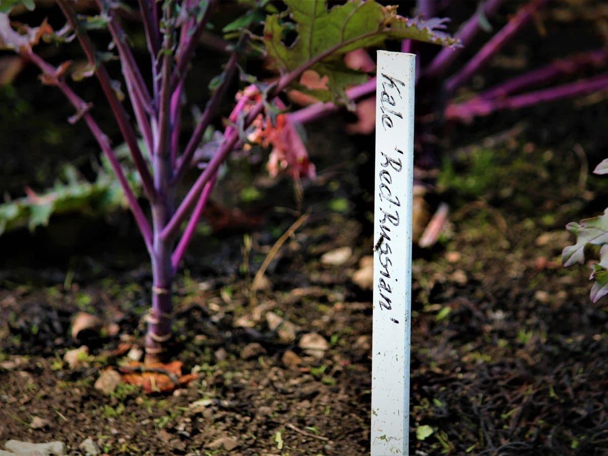 Wooden reed plant marker in soil