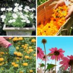 8 Beautiful Full Sunlight Perennials for an Endless Cutting Garden