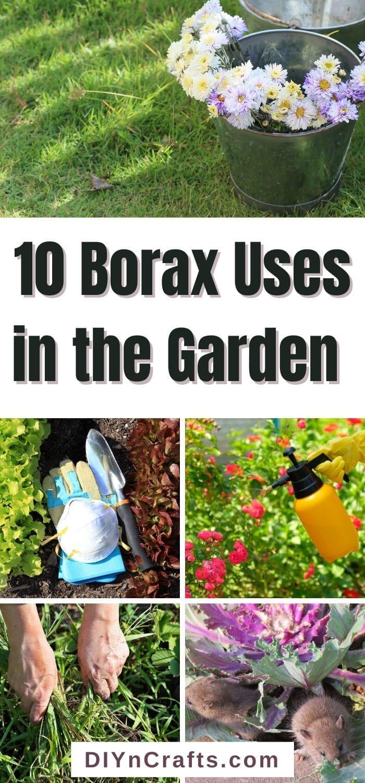 Borax Uses in the Garden