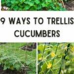 cucumber trellis 2