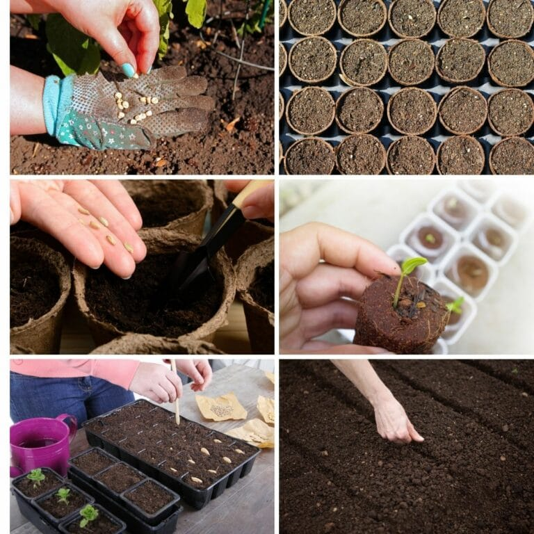 Photo collage featuring germination process from the article.