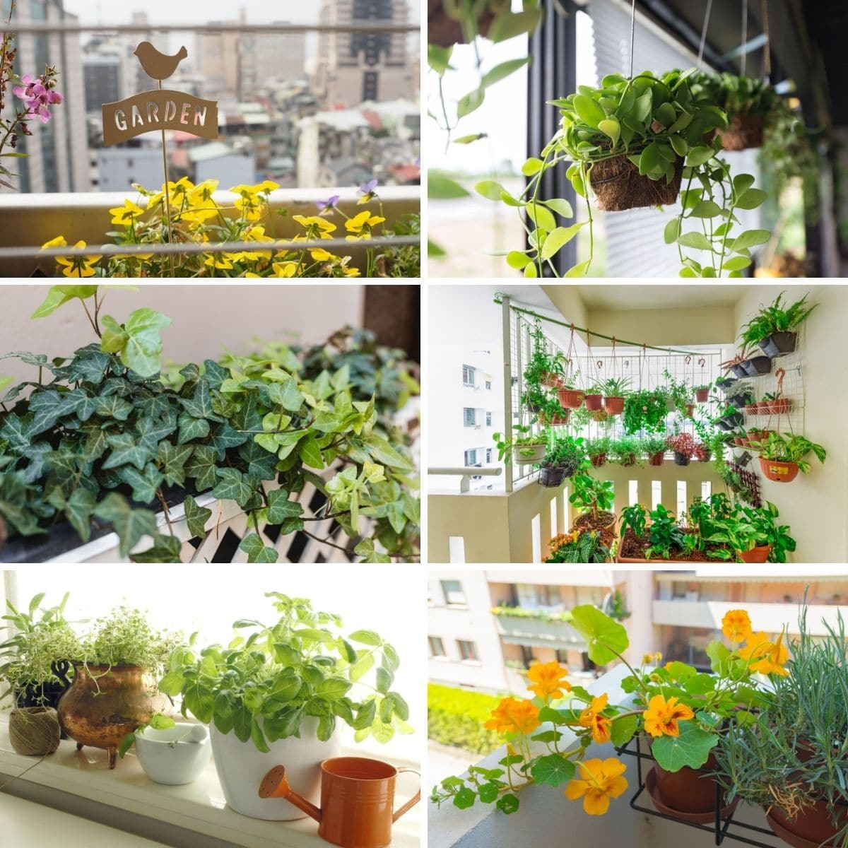 Tips for Urban Gardening