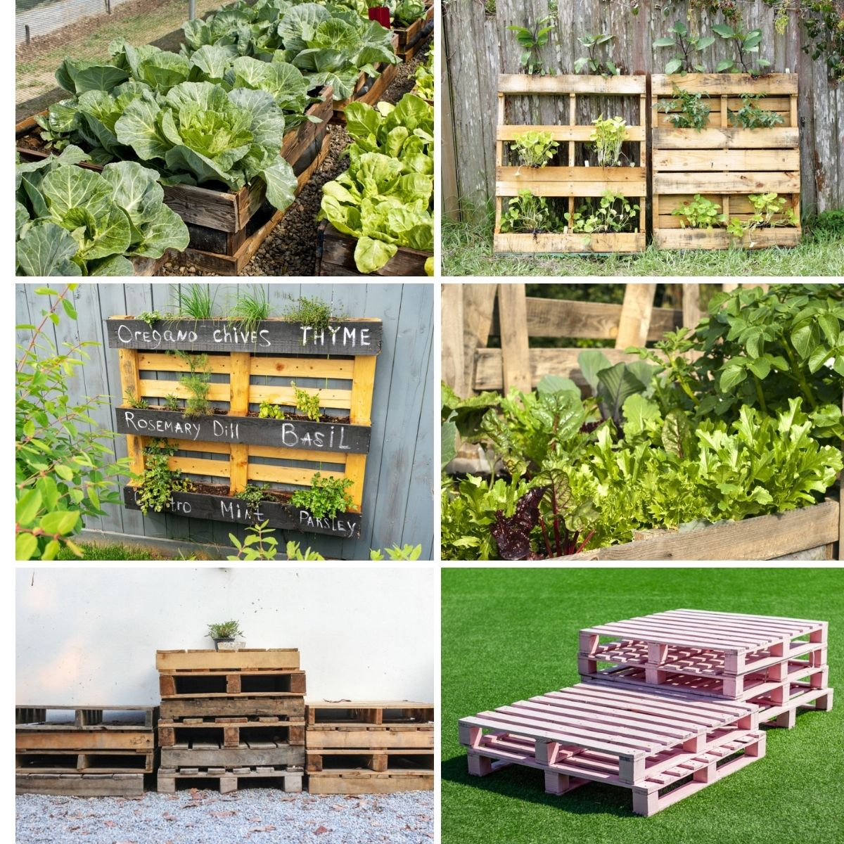 Pallet garden images from the content formed as a collage.