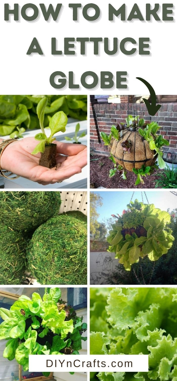 How to Make a Lettuce Globe