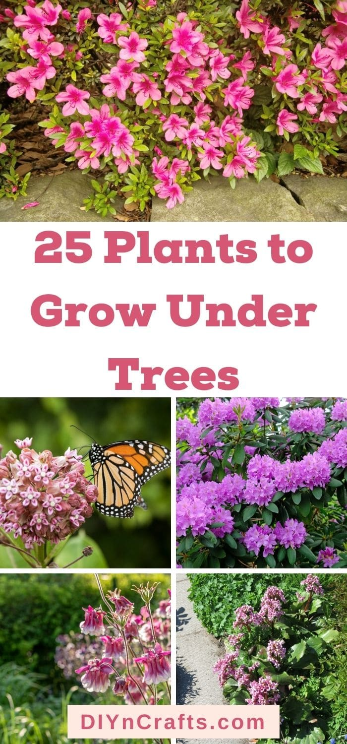 plants to grow under trees