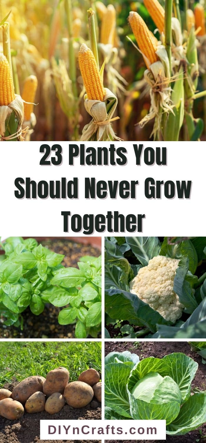 Plants You Should Never Grow Together
