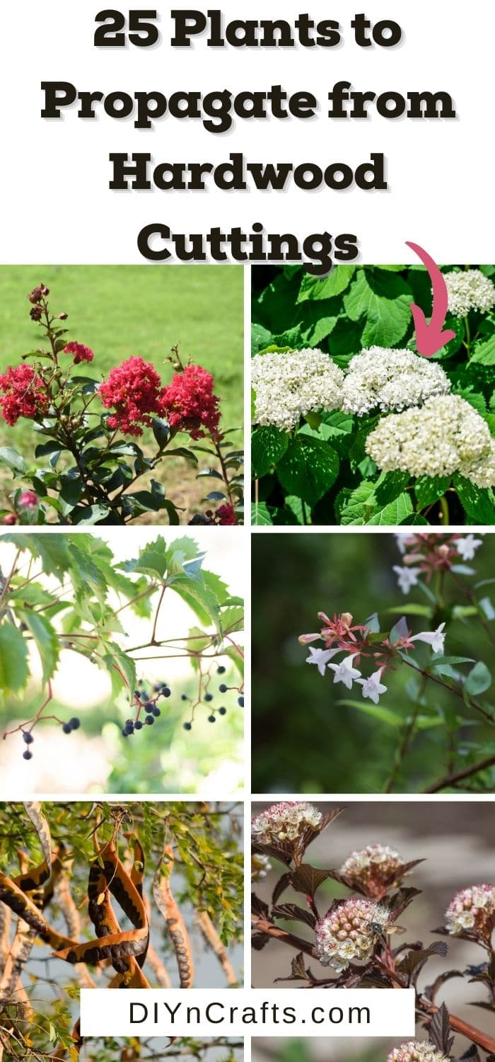 plants to propagate from hardwood cuttings