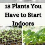 Pflanzen, die Sie drinnen starten müssen