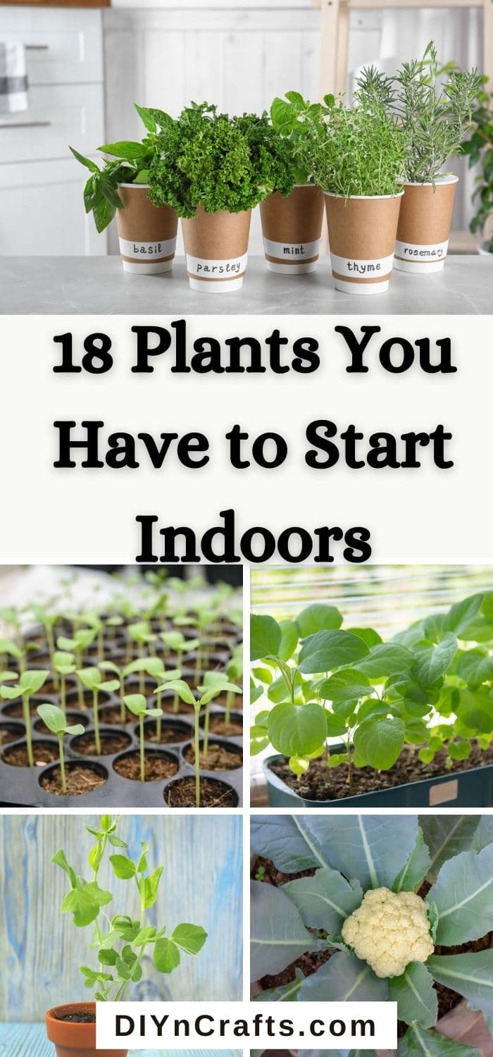 Plants You Have to Start Indoors