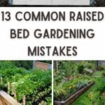 Common Raised Bed Gardening Mistakes