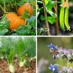 best companion plants for squash