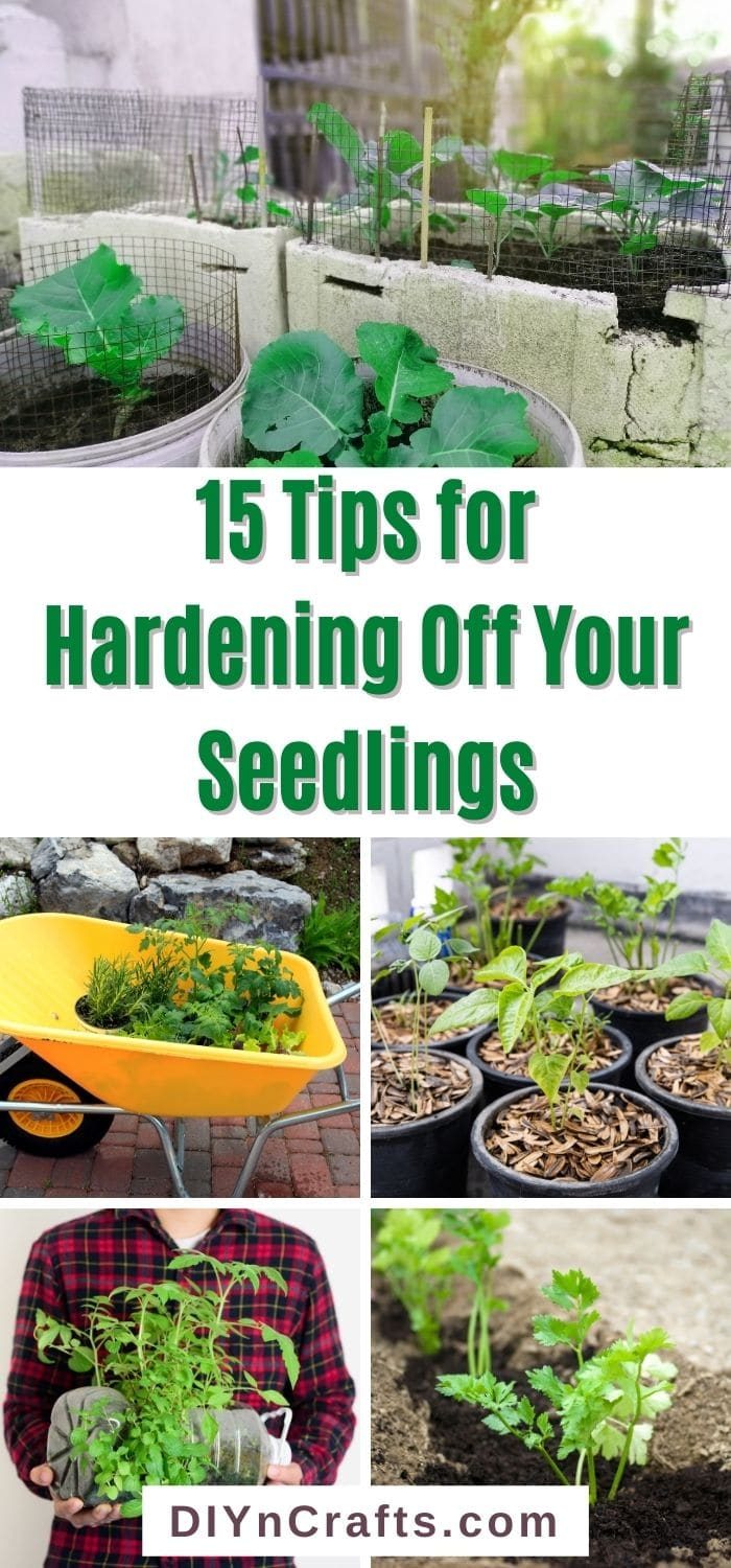Tips for Hardening Off Your Seedlings