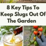 Tips To Keep Slugs Out Of The Garden