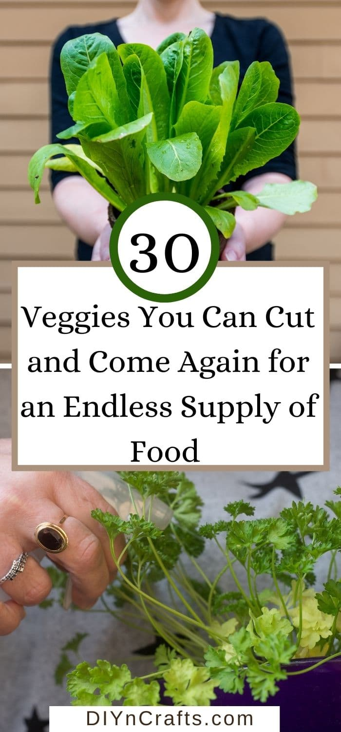 Veggies You Can Cut and Come Again for an Endless Supply of Food