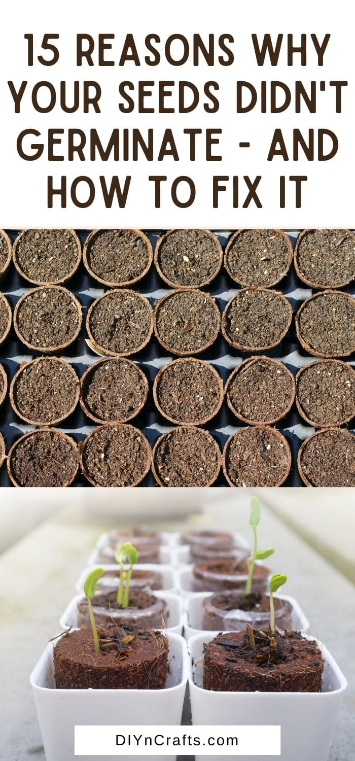 Reasons Why Your Seeds Didn't Germinate