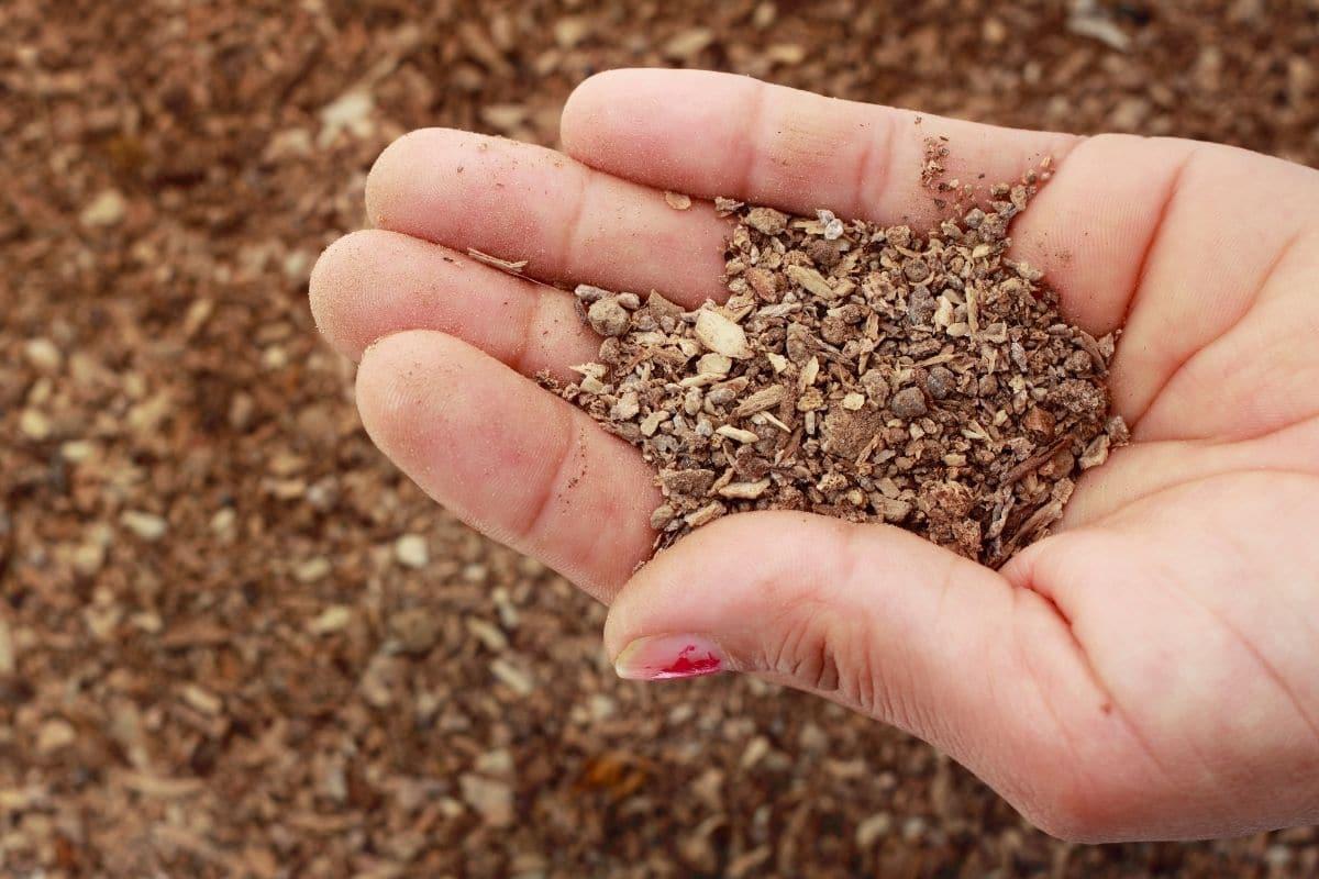 bone fertilizer in hands