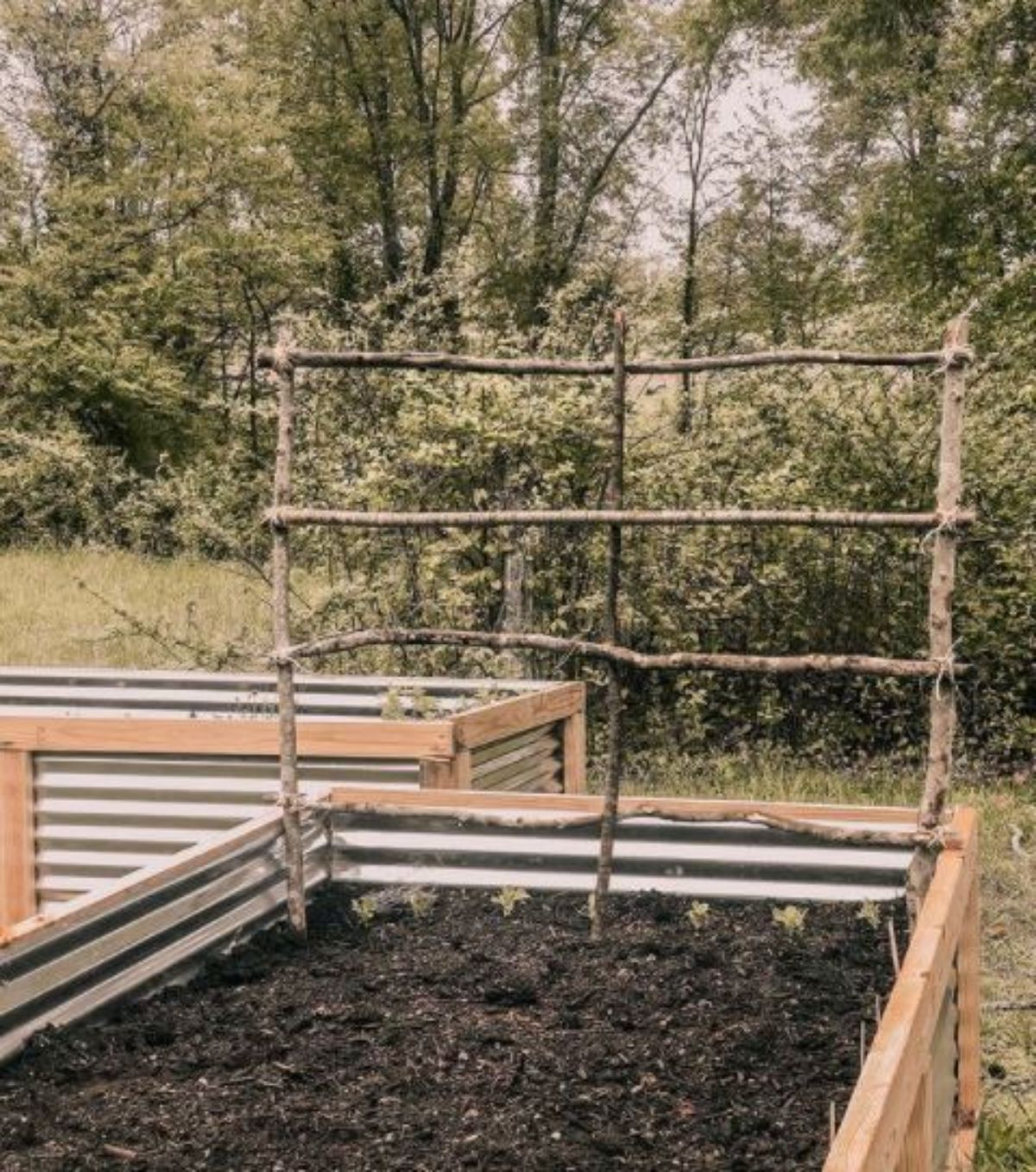 raised bed with twig trellis in the garden preparing for planting