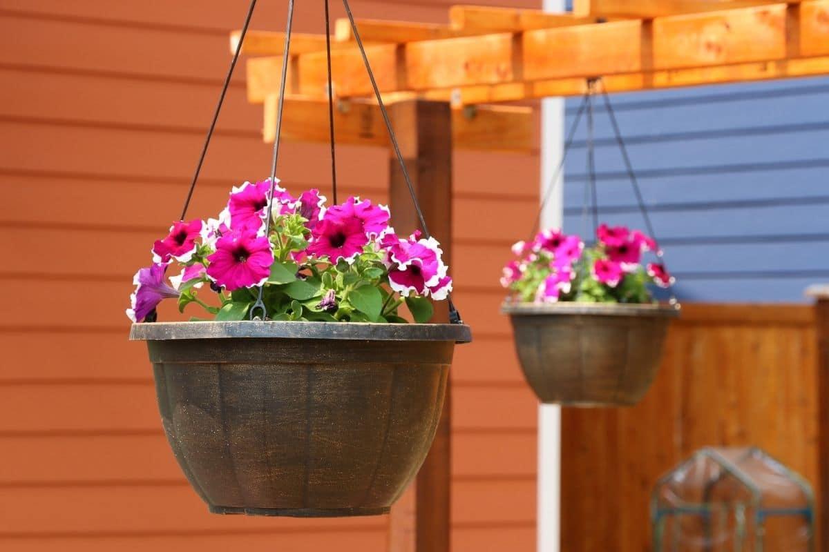 Flowers in pot hanging in a pergola trellis