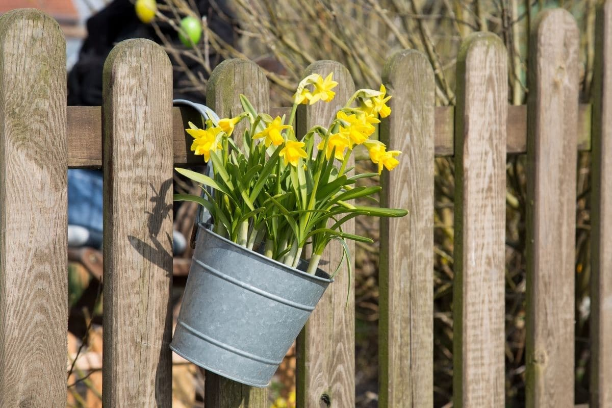 Flowers in a pot hanging in a fence