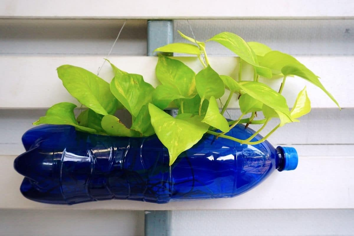 DIY bottle planter, recycled bottle planter with growing plant