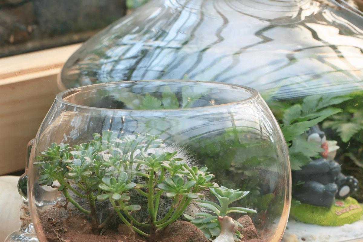 miniature succulents in a glass