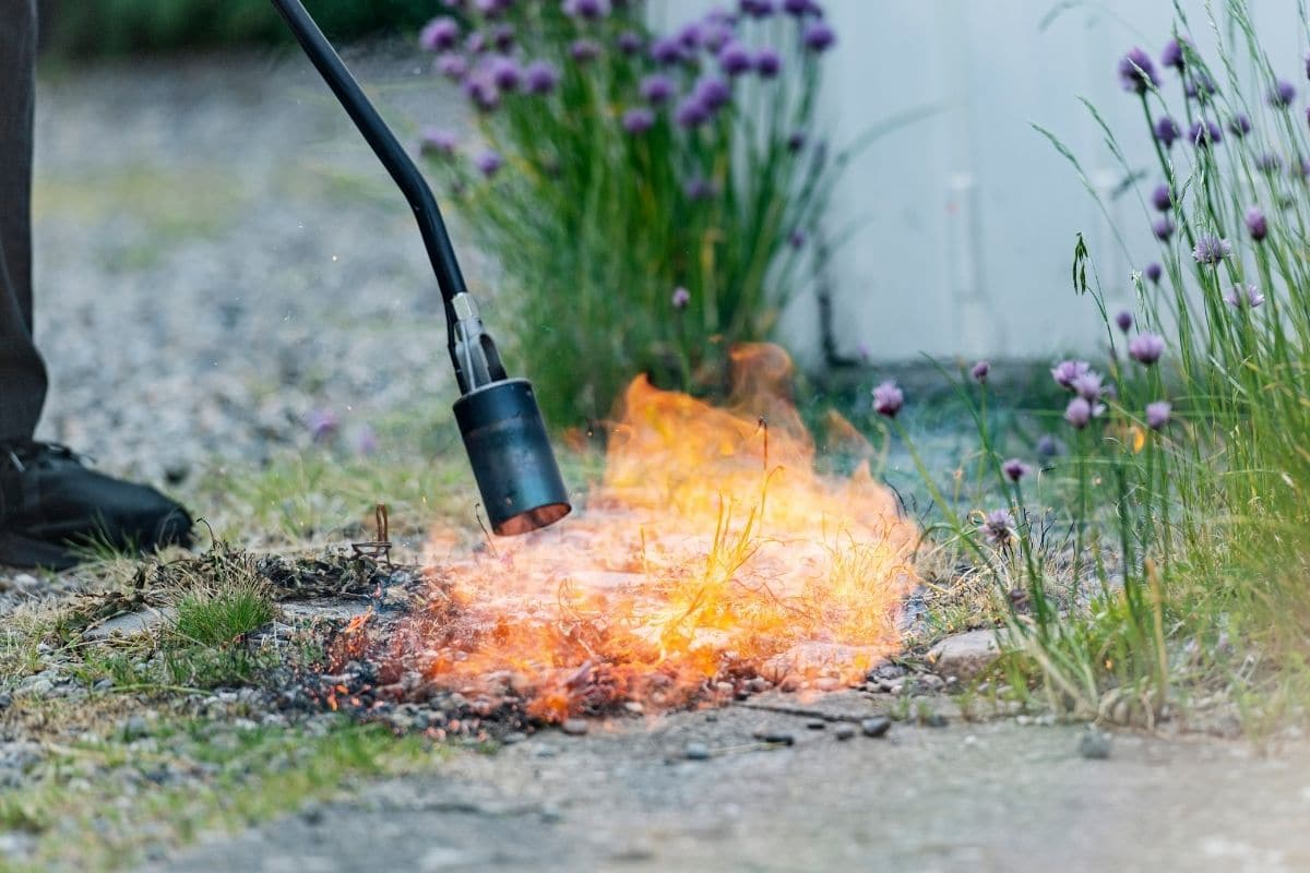 using Flame Weeder to burn and get rid of weeds in the garden