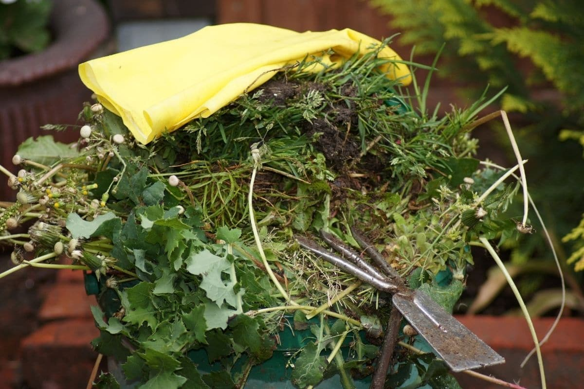 pile of collected weeds from the garden to compost