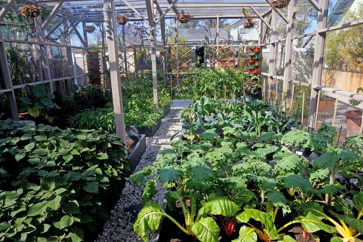 growing vegetable plants in a greenhouse