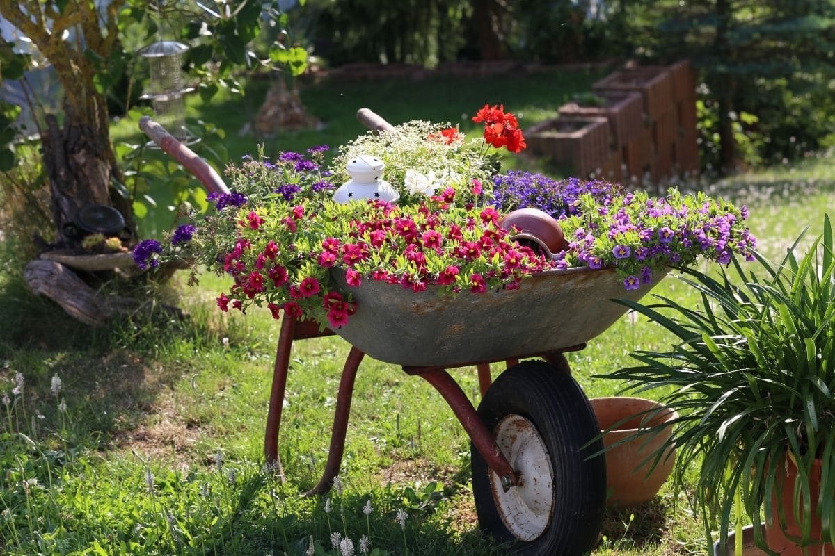 an old wheelbarrow repurposed to a pot for flowers