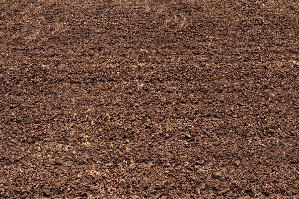 a healthy soil ready for planting
