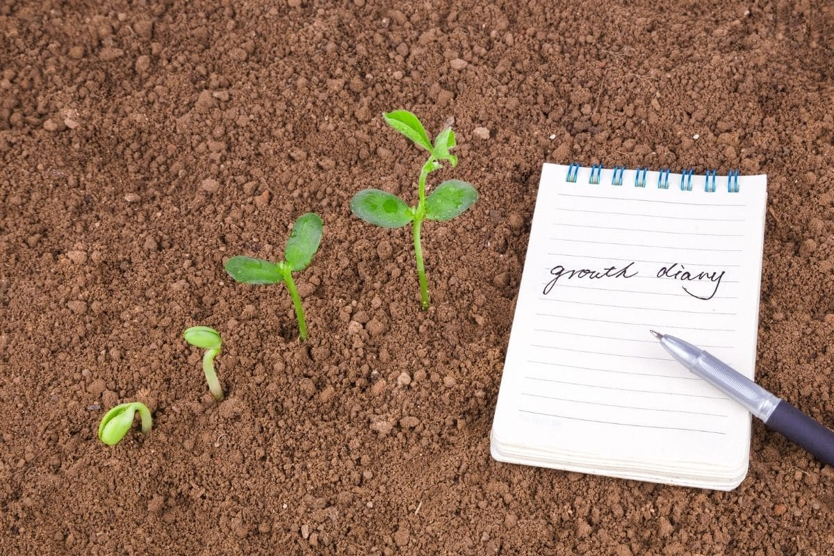 growing seedlings, stages of seedlings beside a note book with pen, recording growth of plants, garden planning
