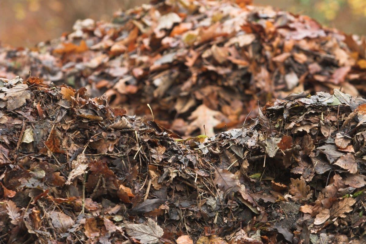 pile of leaves for mulching soil