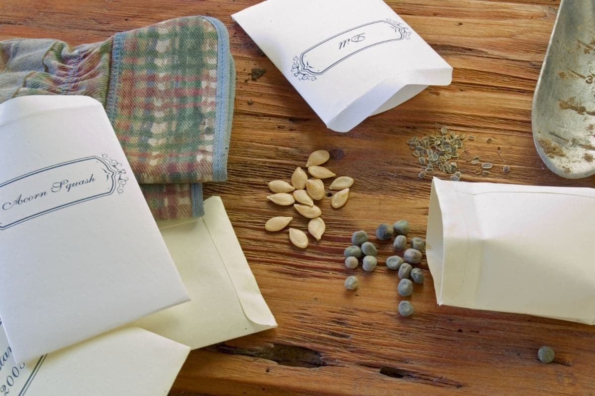 spilled seeds and seed packets in a table