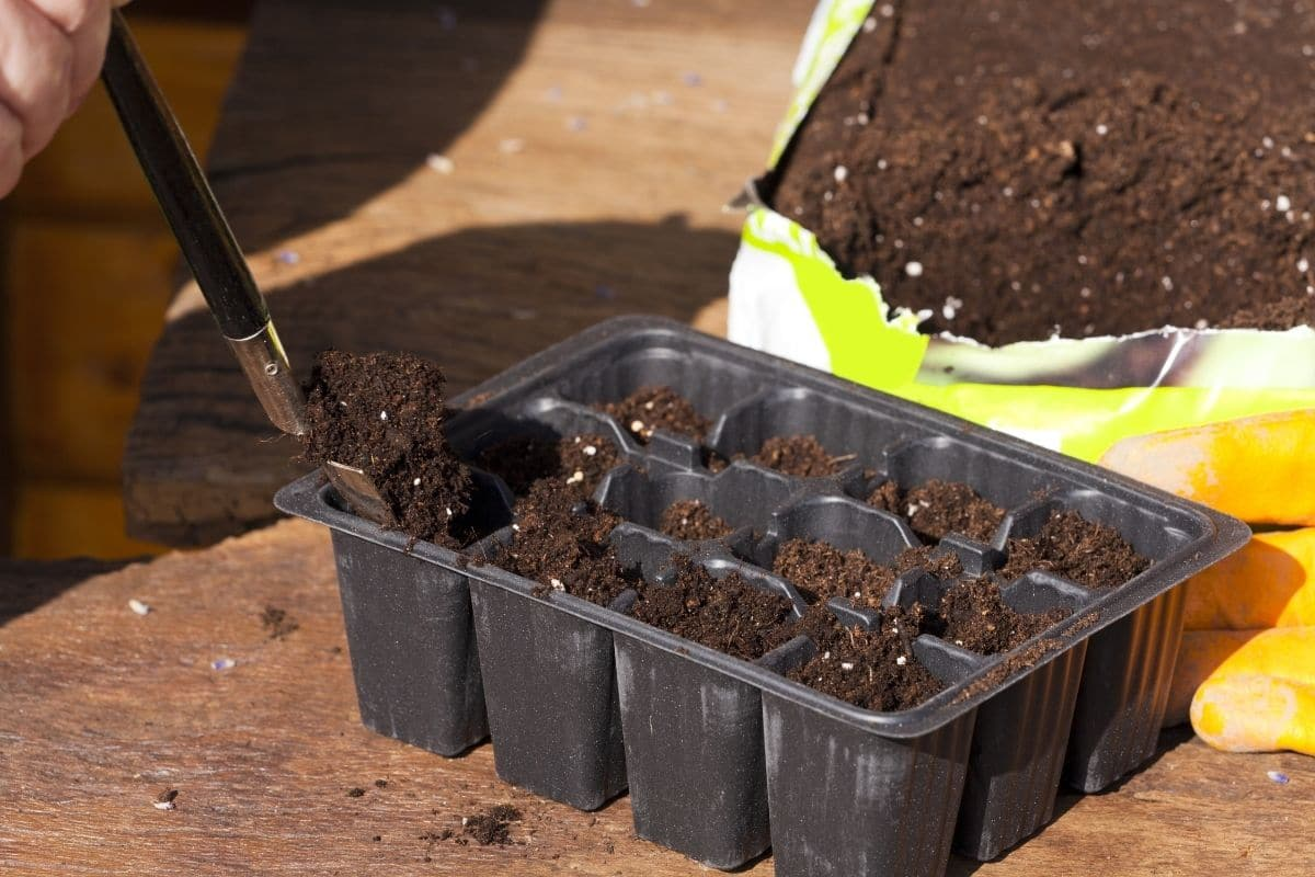 filling the container with potting soil in the garden
