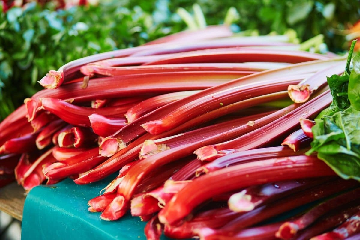 harvested rhubarb stalks in a table