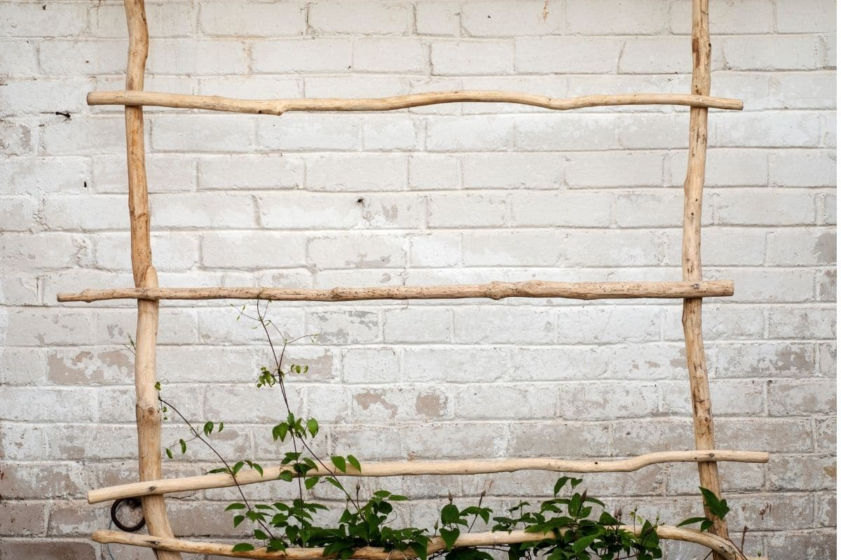 ladder made of twigs to hang the plants or for vine plants
