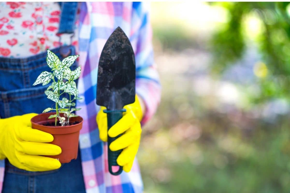 carrying a seedling in a pot and small shovel to transplant in the garden