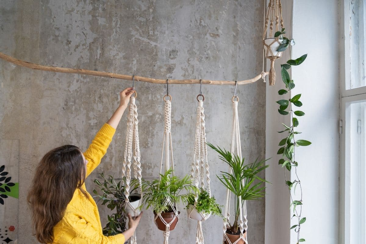branch or twig plant hanger