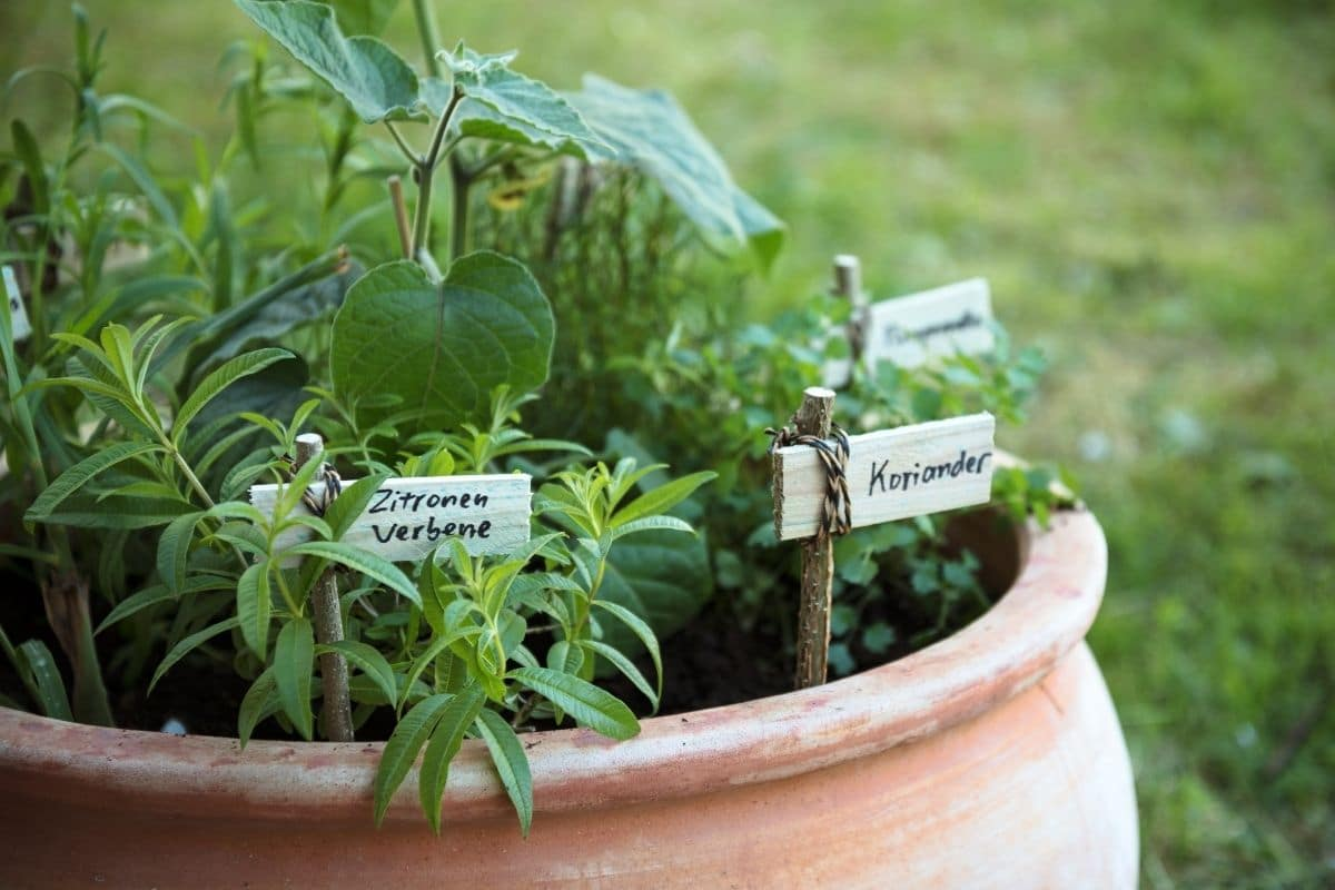 plant markers using twigs in a pot