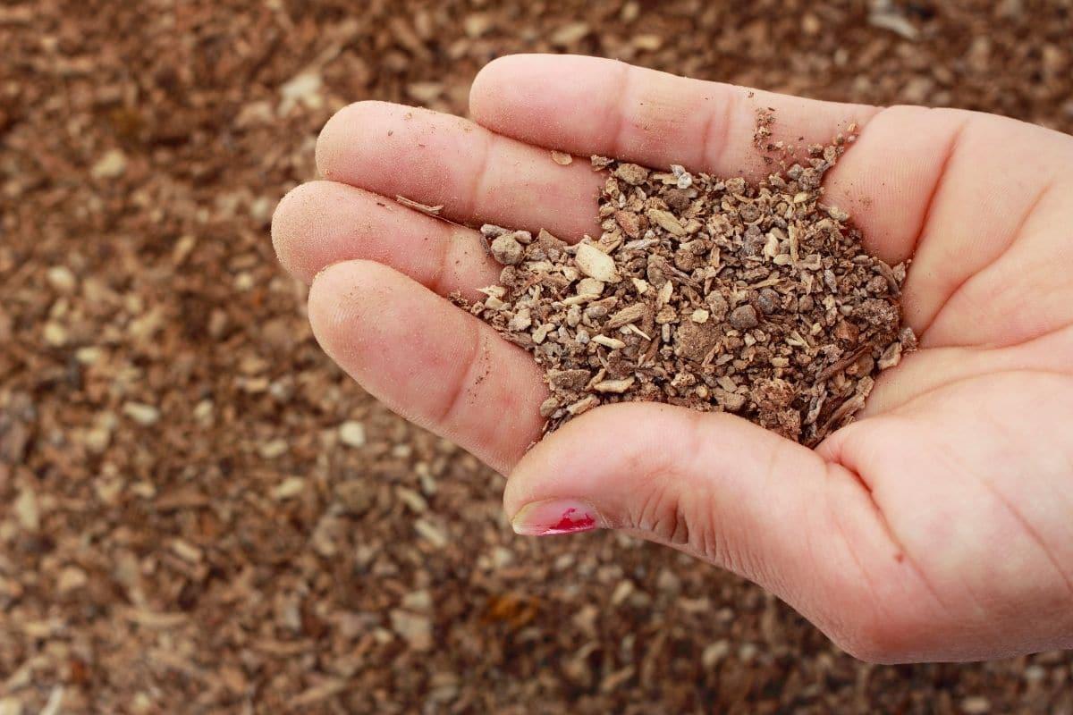 organic fertilizer in hands