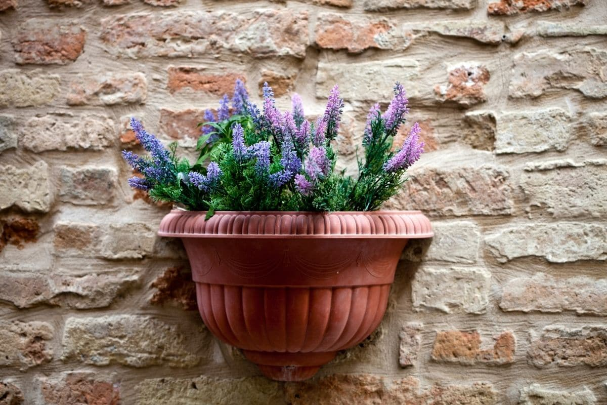 lavender in pot of a brick wall by the hallway