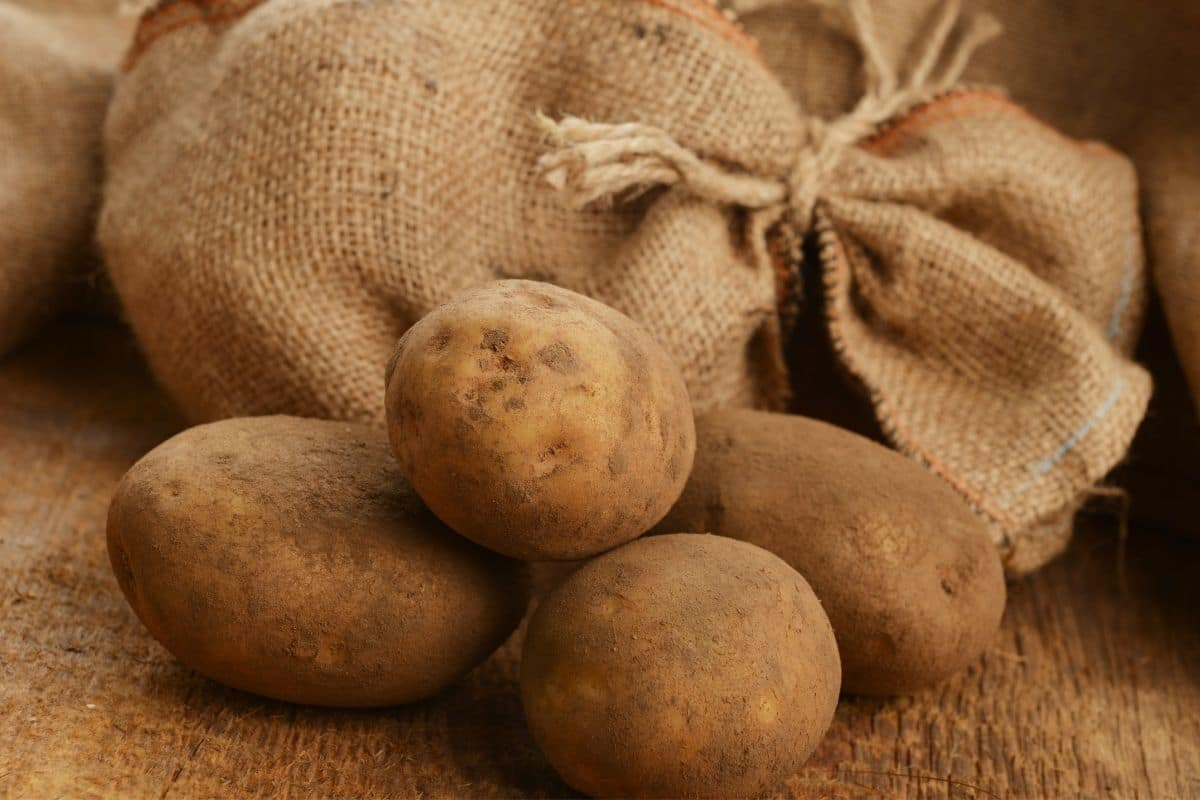 freshly harvested potatoes still with dirt and a tied burlap bag