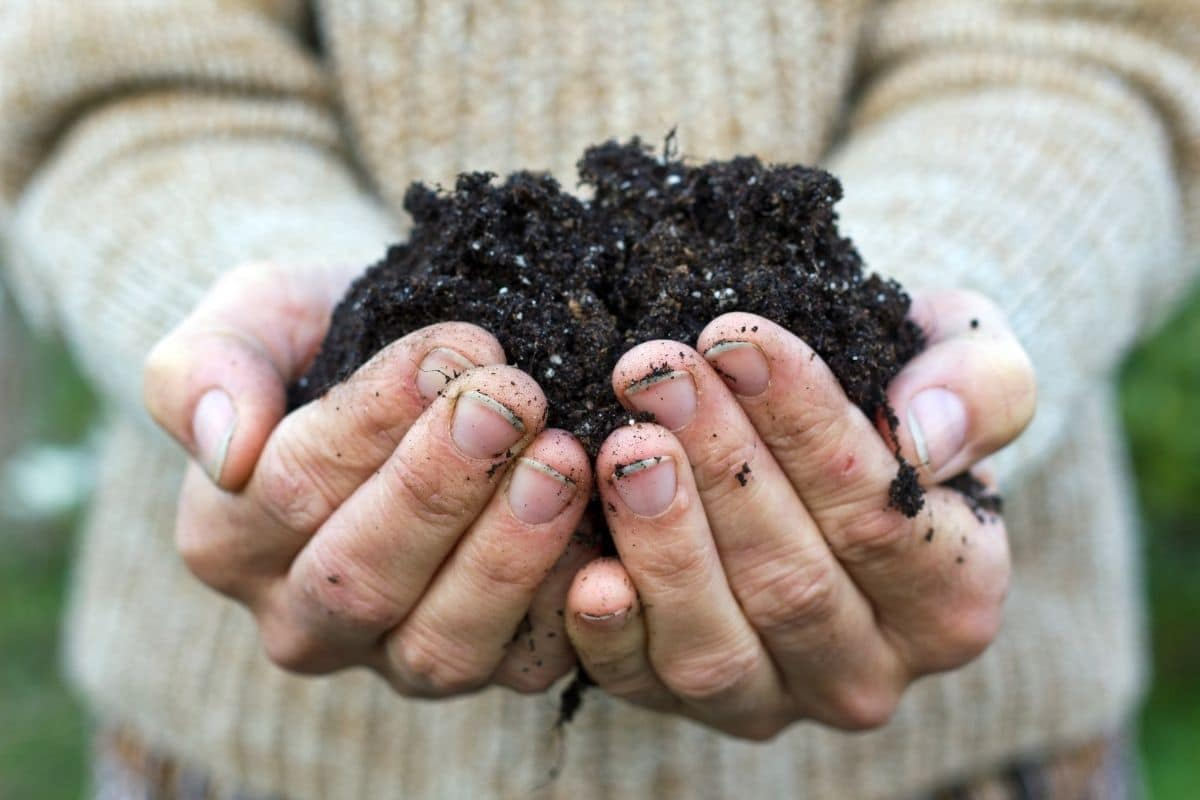 holding a garden soil with both hands